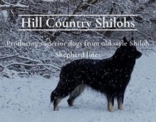 hill-country-shilohs