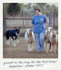 sheep-gareth-2007-2
