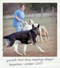 sheep-gareth-2007
